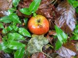 Under an Apple Tree on a Rainy Day