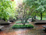 Impressionistic Garden View in the Rain