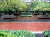 Garden View in the Rain
