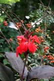 Garden View - Canna, Rose Hips & Japanese Anemones
