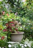 Under an Apple Tree - Garden View