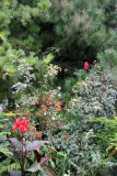 Pine, Dahlia, Rose Hips, Anenomes, Canna