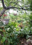 Under an Apple Tree