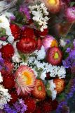 Union Square Flower Market - Fall & Winter