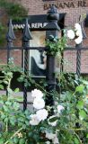 Minetta Triangle Roses on Minetta Street