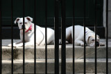 Guard Dogs at Saint John's Church