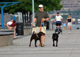 Walking the Dogs on Christopher Street Pier