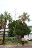 Yucca Tree?