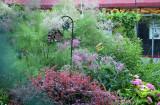 Garden View - Tamarisk Tree Blossoms