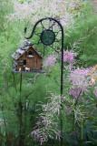 Garden View - Tamarisk Tree