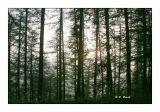 Le soleil dans les arbres