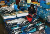 Fish market at Jumunjin