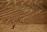 Vegetable Farming near Mataral
