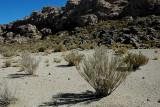 On the Shore of the Salar de Uyuni