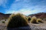 Desert Bushes in Potosi