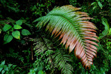 Forest vegetation in Las Yungas, Parque Amboro, Santa Cruz, Bolivia