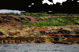 Coquet Island full of birds