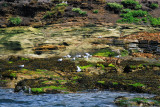 Coquet Island with all its bredding birds
