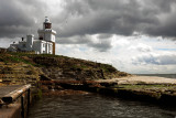 Coquet Island with Puffins, Doves and all other birds