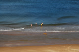 Beach Fun in the Waves