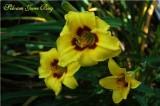 Siloam June Bug