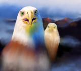 Osprey off  San Juan Island.jpg