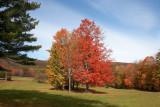Fall Trees in Field