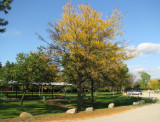 Autumn  - Park on Elms Rd.