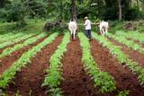 Farming near Belur