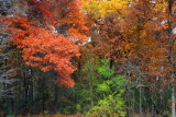 Deer Grove Forest Preserve, Palatine, IL - Fall colors - Count the Fall Colors
