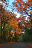 Illinois - Deer Grove Forest Preserve, Fall Colors