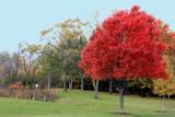 Illinois - Palatine Hills Park - Red Bloom, Fall Colors
