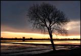 Early morning near Amposta