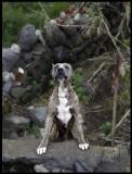 Watchdog - Ponta del gada