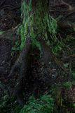 Furnas lichen