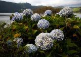 Flowers at lake Furnas
