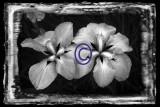 Southeastern CT flowers
