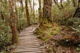 Timpohon Summit Trail