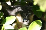 Cats of Croatia