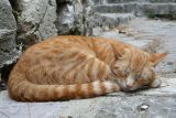 Cats of Montenegro