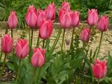 Rococo Garden 04-2008(0012).jpg