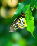 Yellow Green Red Butterfly.jpg