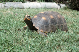 Tortoise View