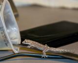 Return of the Gecko