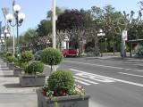 Wiesbaden - Trees