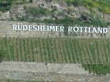Rhine - Rudesheimer Rottland