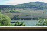 Rhine - River and Grapes
