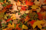 Pile of Colorful Leaves