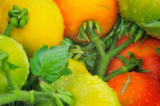 7/21/08 - Tomato Crop