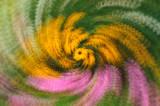 7/27/08 - Swirling Susans (& friends)